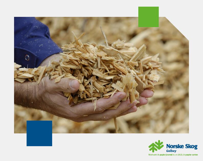 La fabrication de papier provoque t elle vraiment la déforestation Norske Skog Golbey